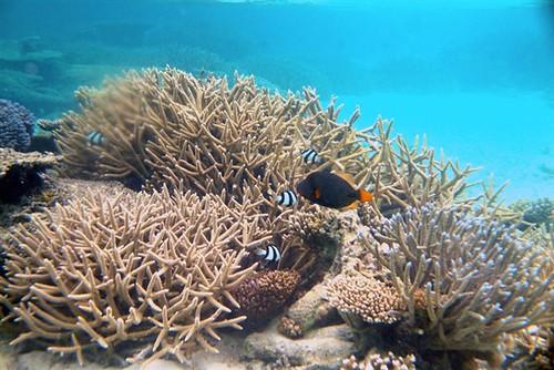 马尔代夫centara蜜月游全记录-浮潜拍摄的海底世界