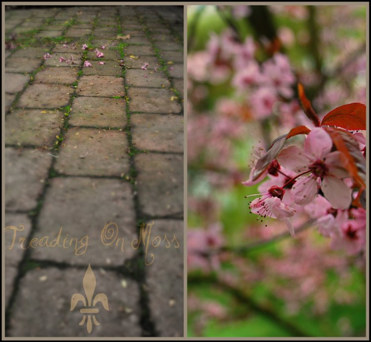 Pink On Pavement-Treading