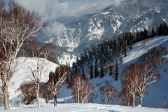 Gulmarg (burrnnsss) Tags: india snow ski skiing powder backcountry kashmir freshtracks gulmarg burrnnsss