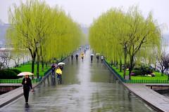 Spring rain at West Lake: Bai Dam  (Y. Peter Li Photography) Tags: china lake west spring plum willow hangzhou    zhejiang