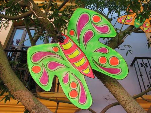 Butterflies in Oaxaca