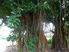 RIMG5895x1000 (Weltbummler) Tags: yerbabuena tucumn bosquenublado nuboselva