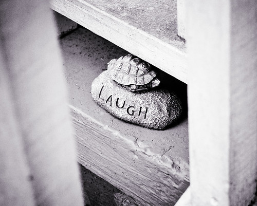 Laughter on the Porch