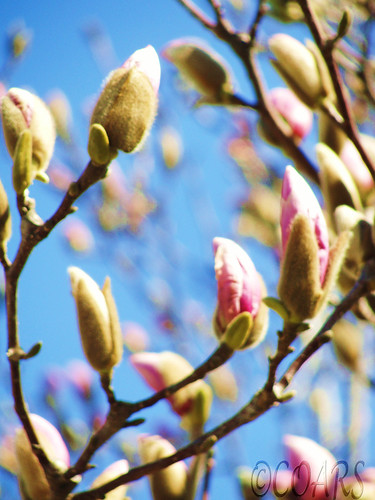 Spring 3.20.10 @WM