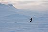 Haukeli (TrulsHE) Tags: winter white snow kite cold norway norge vinter cloudy kiting dnt snø kiteskiing haukeli snowkiting kaldt hvitt overskyet fjellstue haukeliseter turistforeningen