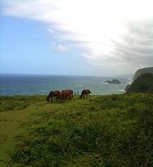 Yet another beautiful Hawaiian vista