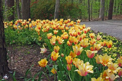 Garvin Woodland Gardens 16