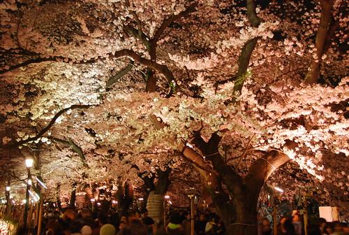 千鳥ヶ淵緑道にて夜桜