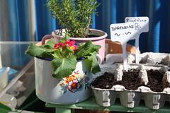 Our little organic garden (Die fabelhafte Welt der Manati-Mum) Tags: wien gardening circus balkon bio organic sonne homegrown balkony terasse