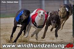 Greyhounds beim 480m Finale in Hildesheim