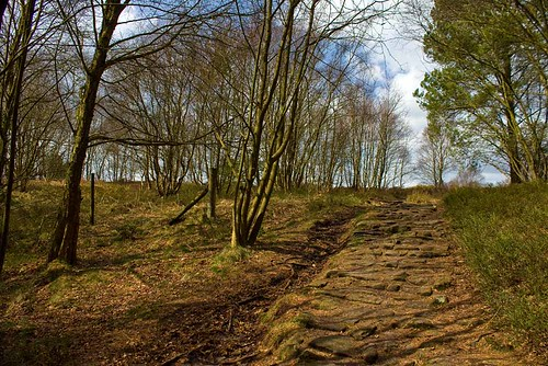 Dalby Forest Path