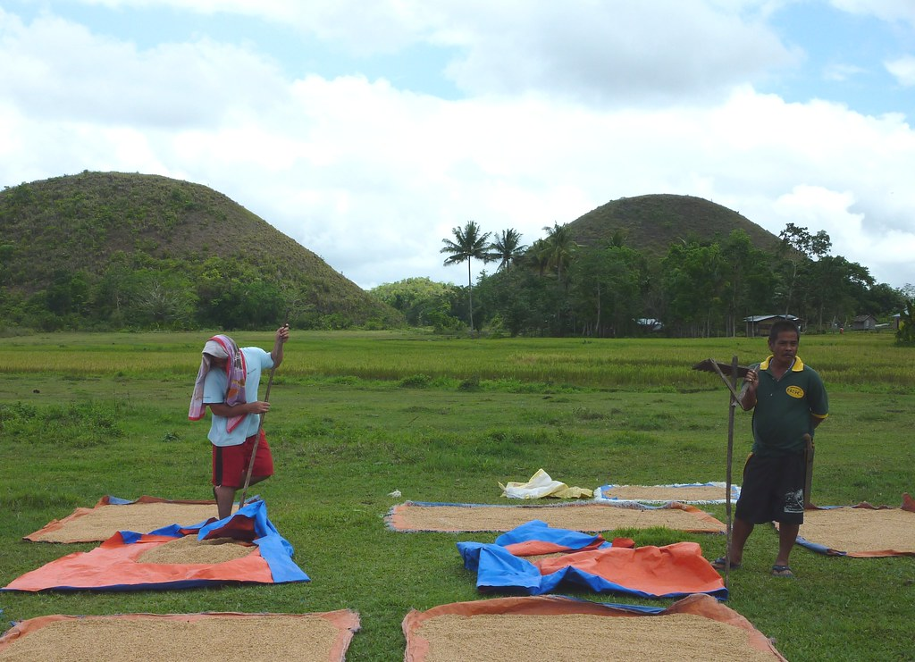 Bohol-Talibon-Chocolate Hills (50)