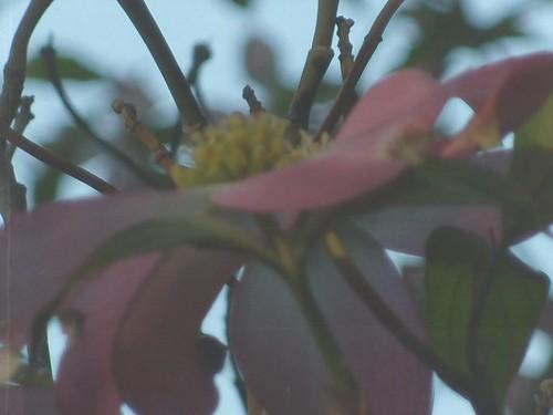 petal view