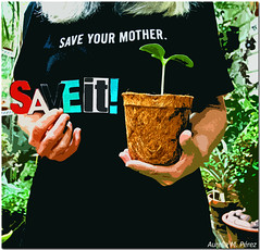 Save Mother Earth (Explored) (1crzqbn~away) Tags: plants selfportrait color verde green ecology sign hands quote autoretrato tshirt naturallight explore seedling earthday coth project365 saveit environmentalresponsibility savemotherearth johnmcconnell dadelatierra internationalearthday butternutsquashseedling shuttersisters365 fadedblurred3652010 1crzqbn saveyourmother awakenthewonderoflife