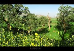 Kurdistan Flowers, Nature,