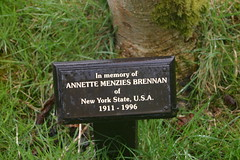 Tree in Memory of Annette Menzies of Brennan of New York State USA 1911 - 1996