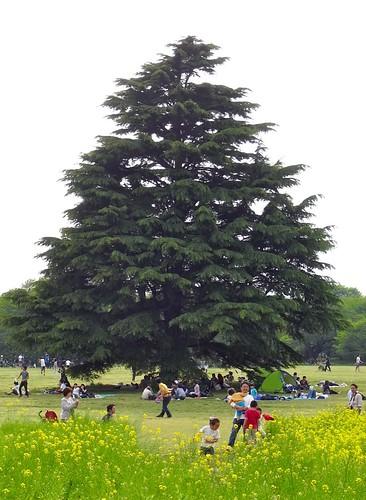 Showa Kinen Park - tree