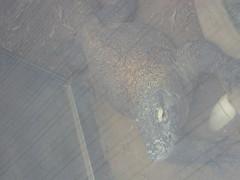 IMG_0922 (superdubey) Tags: zoo dc washington national dc08