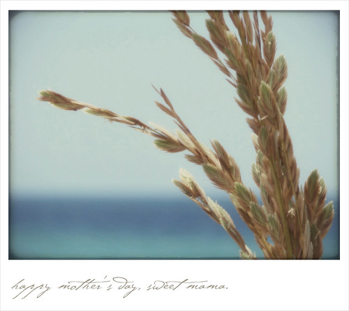 "sea oats ""polaroid"""