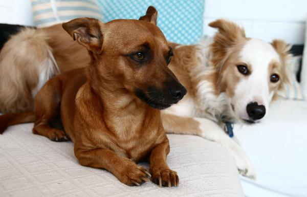 Pip and Maisie-2