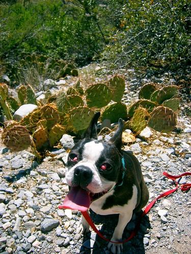 Cactus & Henry