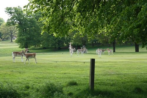 Pics Of Deer Fighting. Deer fighting