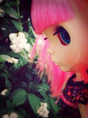 Trixie in Profile - 319/365 ADAD
