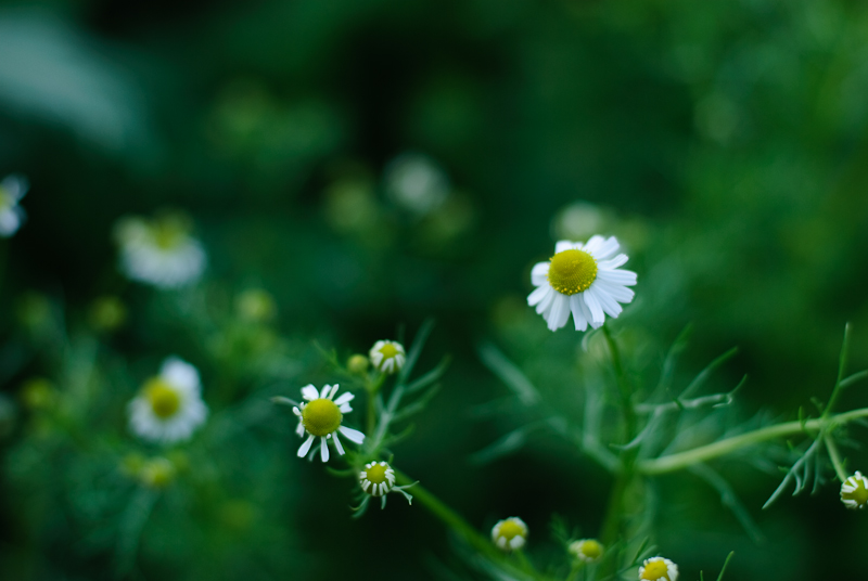 Spring in Botanic garden #37