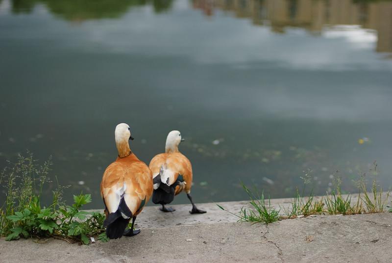 Duck Tales #1