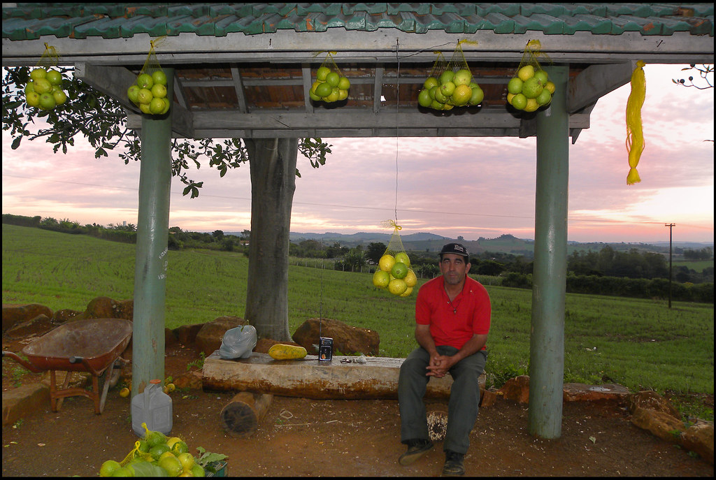 Seller guavas