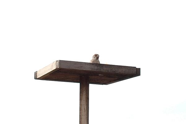 バードテーブル
