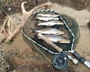 Good Days Fishing (DonaldUist) Tags: brown fishing south rod loch trout frasers uist antler howmore