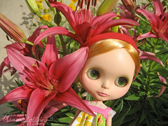 more giant lilies