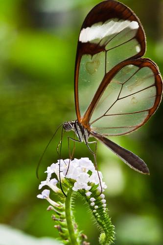 100606_0043_Garten der Schmetterlinge (by blichb)