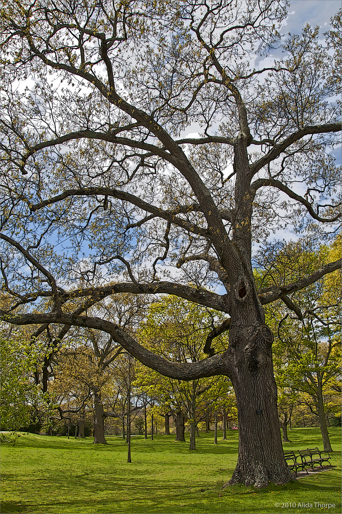early spring arboretum