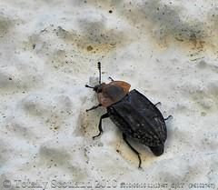 Beetle 2/2