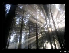 rayons de soleil dans le foret de myon (francky25) Tags: de soleil le foret dans rayons doubs comt raylight franche myon passiondclic