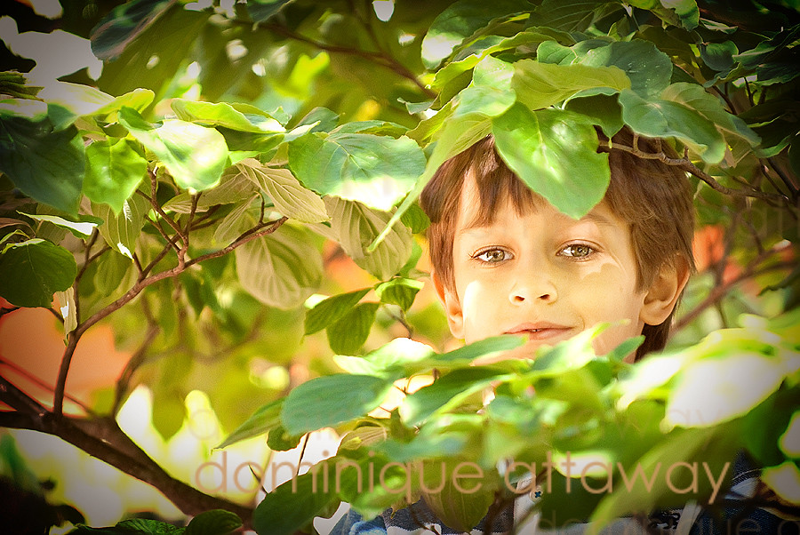 little boy in a tree