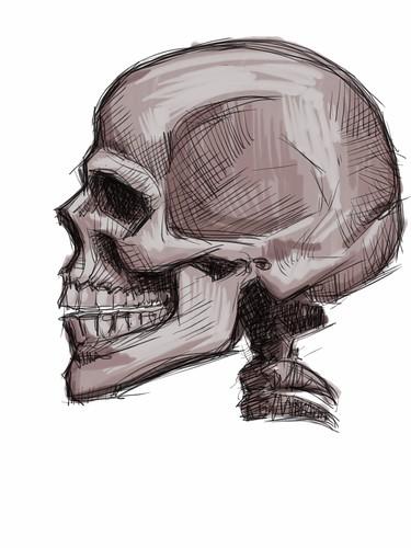 skull study with iPad - 2