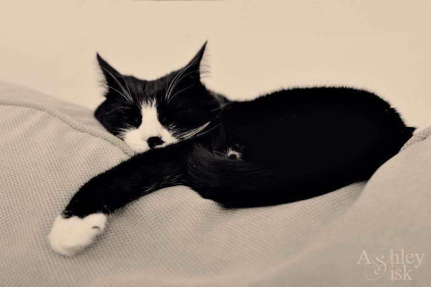 Sleepy Paw