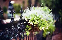 fence friday - denver style (Simutis [nancy]) Tags: flowers fence bokeh denver rainy friday d700 larimarsquare