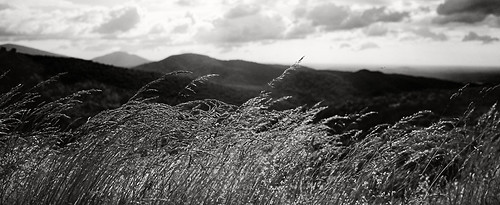 Skyline Grass