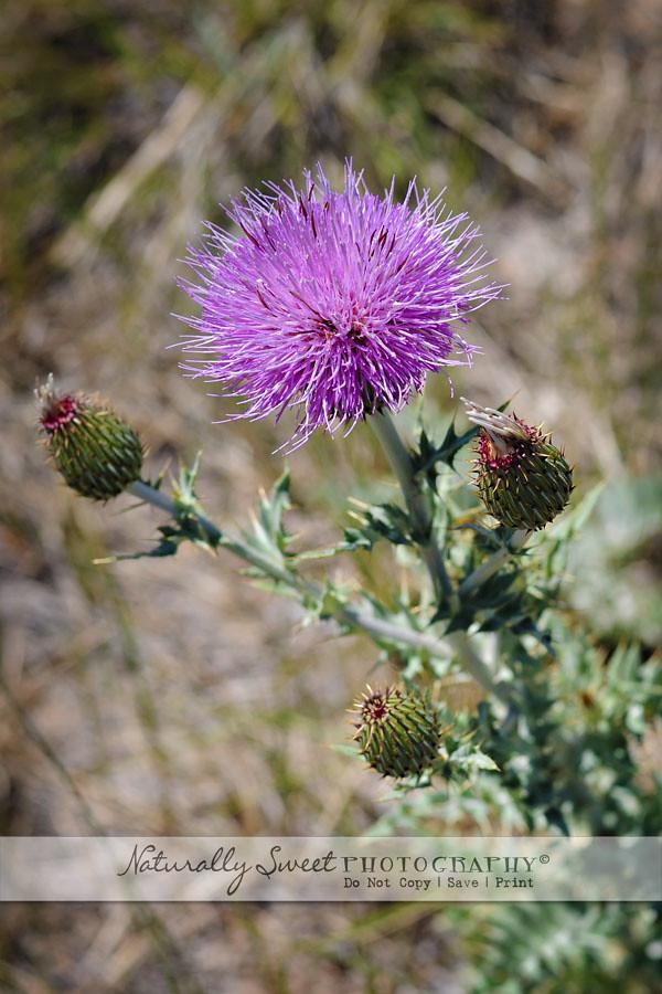 wild flower rs
