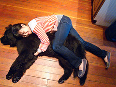 two of my favorite creatures (mishy111) Tags: newfoundland spooning lisa mojo giantdogs furrymonsters hilariousdogs beingspooned dogsnamedmojo girlsnamedlisa girlsspooninggianthilariousdogs