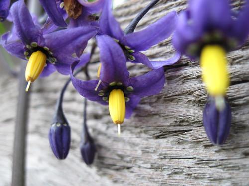 Lovely Flora