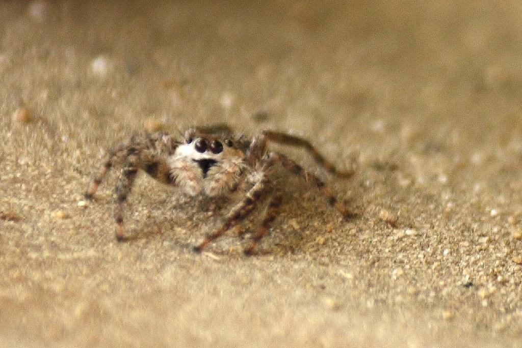 unidentified spider (12)