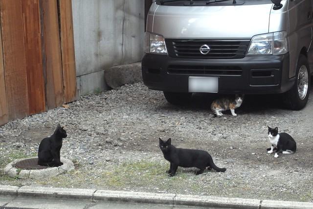 Today's Cat@2010-10-26