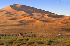 The Desert Dunes - Explore (TARIQ-M) Tags: texture landscape sand desert dunes tent camel riyadh saudiarabia ohhh potofgold         canonef70200mmf4lusm      canon400d          mygearandme