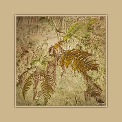 (0405) Farn - Fern (EnDe53) Tags: plant art nature kunst natur pflanze farn ennodernov