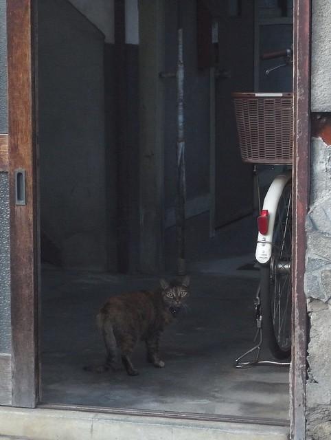 Today's Cat@2010-10-30